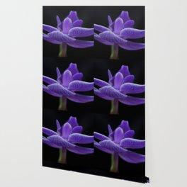 BM Orhcid 003 Wallpaper