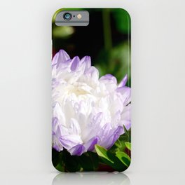 aster with water drops in autumn iPhone Case