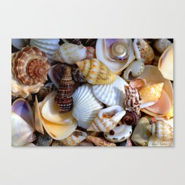 Shell Collection Canvas Print