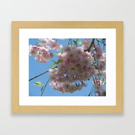 Cherry Blossoms and Sky Framed Art Print
