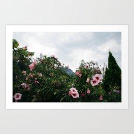 Mountain Garden Hibiscus Art Print