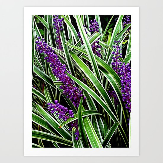 Monkey Grass Art Print