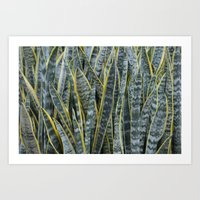 Snake Plants II Art Print