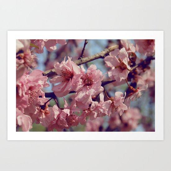 Sakura... One Spring in Beijing Art Print