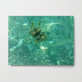 Oh My Squishy! Metal Print