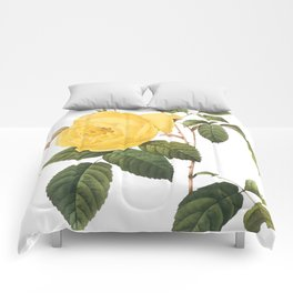 Botanical Print, Yellow Roses, Rosa Sulfurea Comforters
