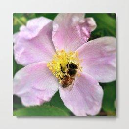 still life with honey bee Metal Print