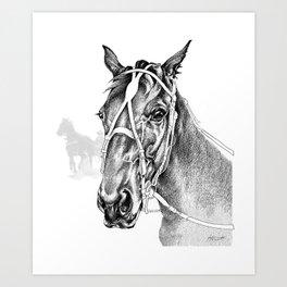 Sir Castleton (NZ) - Standardbred Art Print
