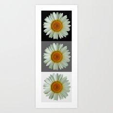 Three Pop Art Daisies Art Print