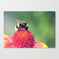 Bumble Bee on a Red Blossom Canvas Print
