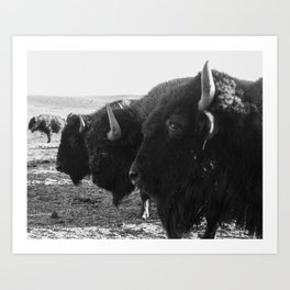 buffalo buddies  Art Print