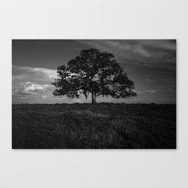 Yggdrasil (Fine Art Landscape Photography) Canvas Print