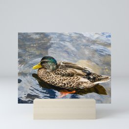 Young Mallard Mini Art Print