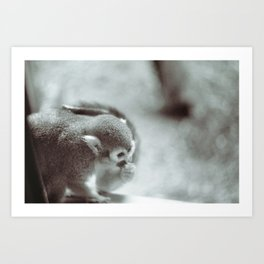 Quiet Monkey Art Print