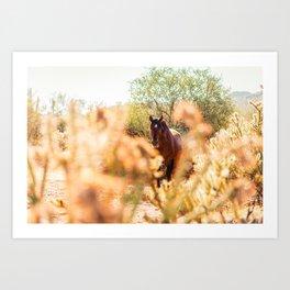 Wild Horse and Cholla Art Print