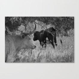 Oklahoma's Wild Longhorn // Black and White Canvas Print