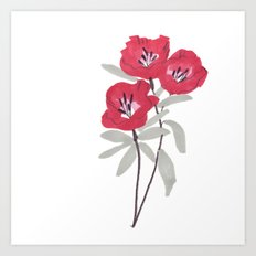 Clarkia Red Flower Art Print