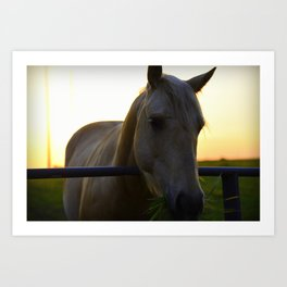 Beautiful Horse at Sunset Art Print