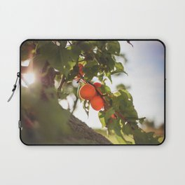 Fresh Apricots On The Tree Laptop Sleeve
