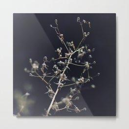 Plant B1 Metal Print