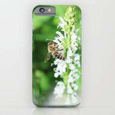 Climbing Bee iPhone 6s Slim Case