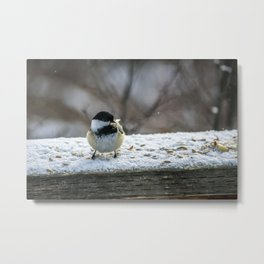 Hungry Little Chickadee Metal Print