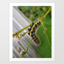 Caterpillar 2 Art Print