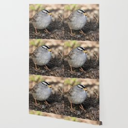Profile of a White-Crowned Sparrow Wallpaper