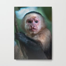 Capuchin Daydream Metal Print