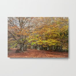 Colorful autumnal forest Metal Print