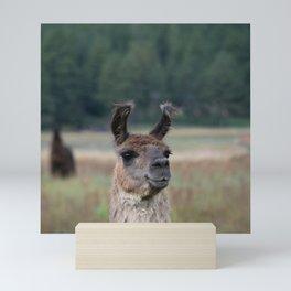 Llama Portrait - 1 Mini Art Print