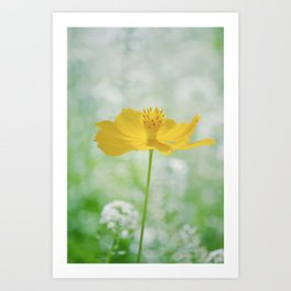 Yellow Bloom Art Print