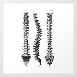 Bone column Art Print