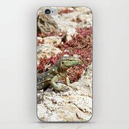 Blue Whiptail Lizard iPhone Skin
