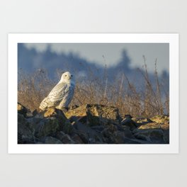 Snowy Owl Perching on the Eastside of a Bern Art Print