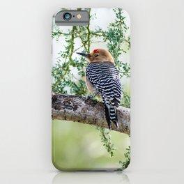 Gila Woodpecker Wildlife Photography iPhone Case