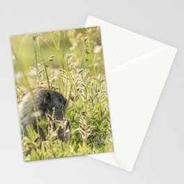 Hoary Marmot's Peek at Paradise Stationery Cards