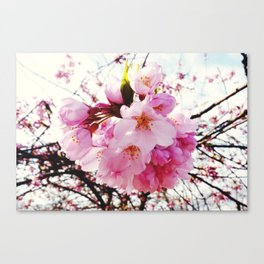 The Reason for Spring Canvas Print