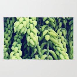 Green of Sedum Morganianum Rug