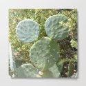 Mickey Cactus | Greek Nature by azima