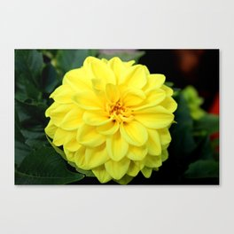 Showstopper Canvas Print