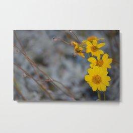 The Yellow Daisy Metal Print