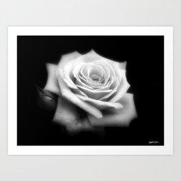 Pink Roses in Anzures 4 Dark Art Print