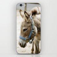donkey iPhone & iPod Skins featuring Donkey by Amanda Stone