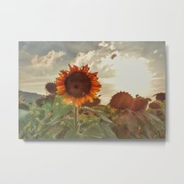 Golden Sunflower Sunsets Metal Print