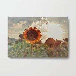 Golden Sunflower Sunsets Metal Print
