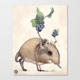 Elephant Shrew Canvas Print