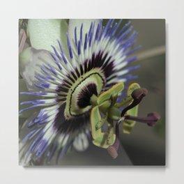 Passionflower Metal Print