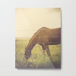 Texas Horse Grazing Metal Print