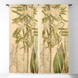 Catasetum barbatum (as Myanthus spinosus) Curtis' 67 (N.S. 14) pl. 3802 (1841) Blackout Curtain